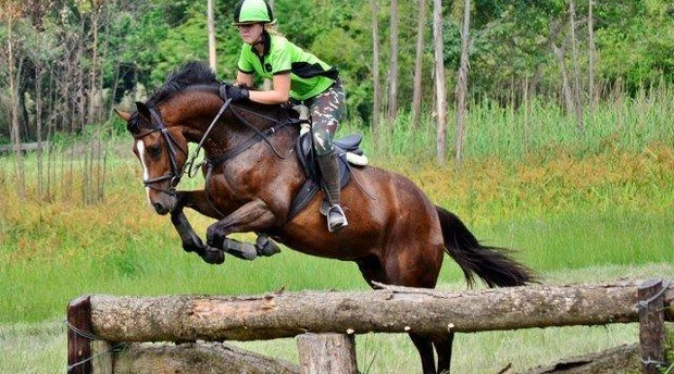 Cross Country Show Jumping Event Underberg